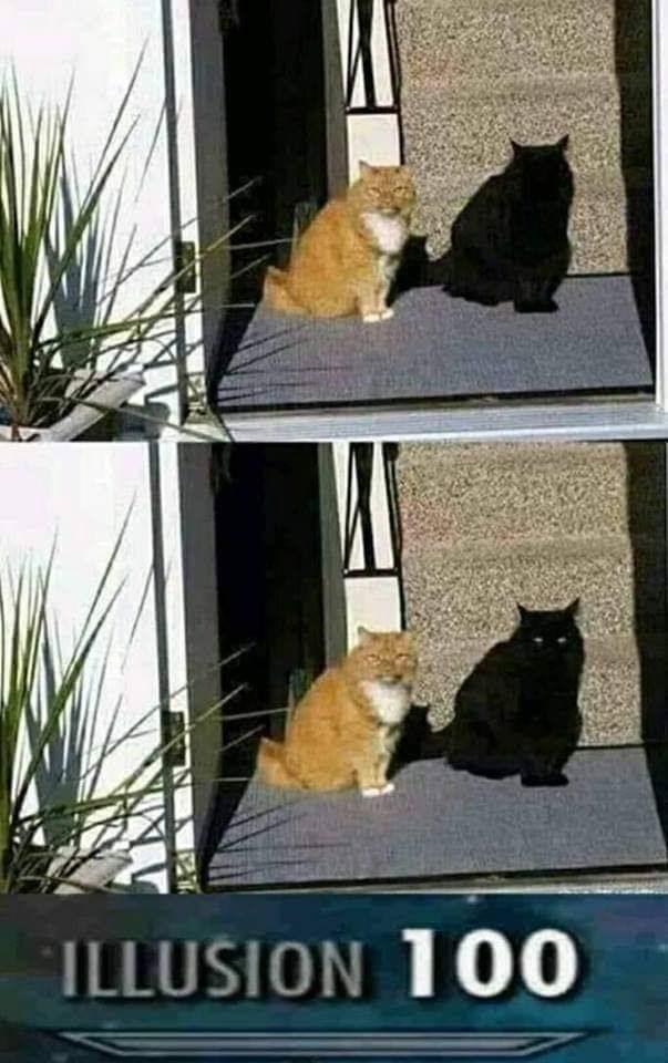 Cat - ILLUSION 100