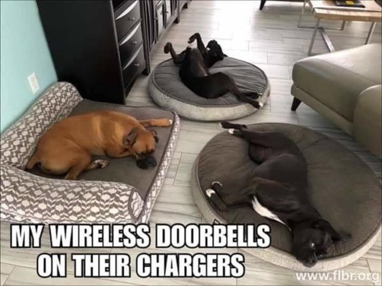 Canidae - MY WIRELESS D0ORBELLS ON THEIR CHARGERS www.fibr.org