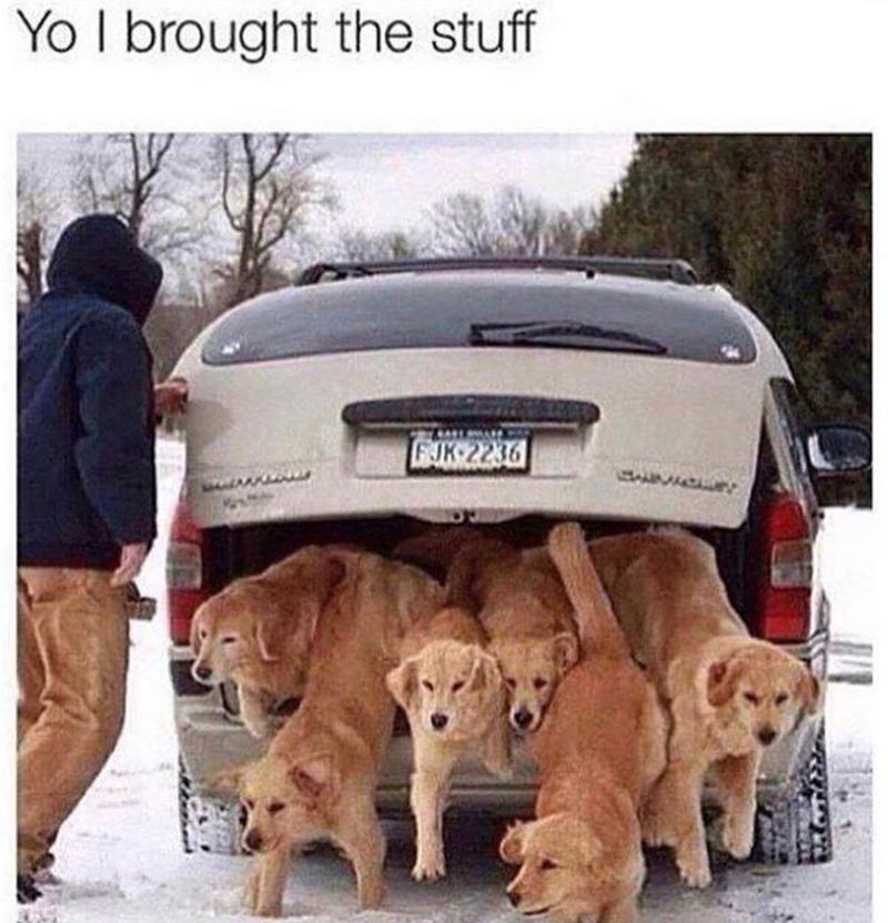 Dog - Yo I brought the stuff GJK 2236