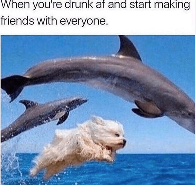 Dolphin - When you're drunk af and start making friends with everyone.