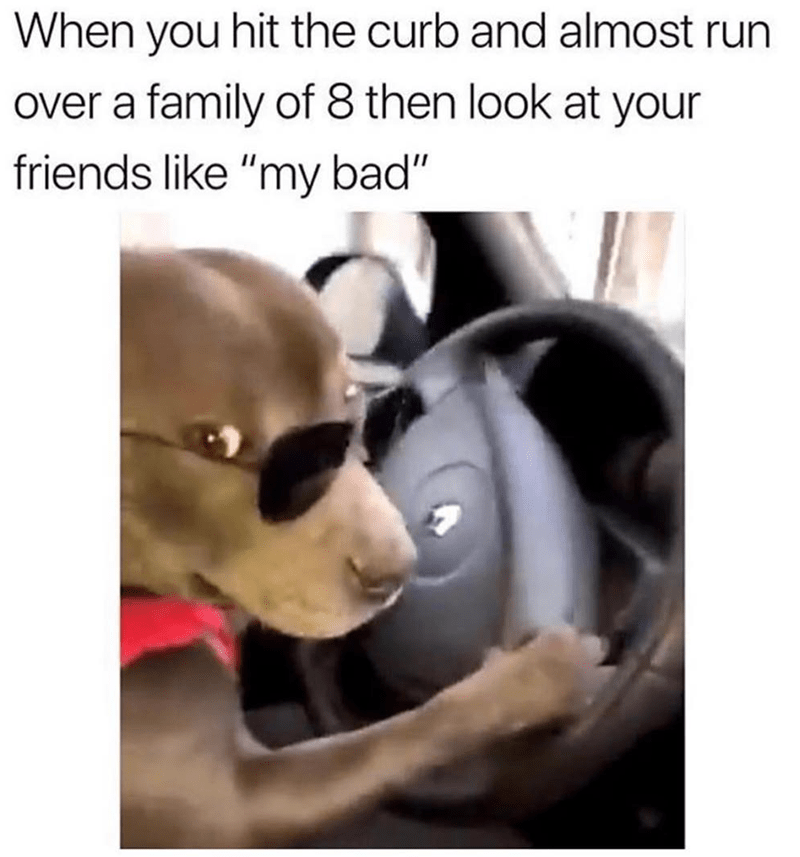 """Head - When you hit the curb and almost over a family of 8 then look at your friends like """"my bad"""""""
