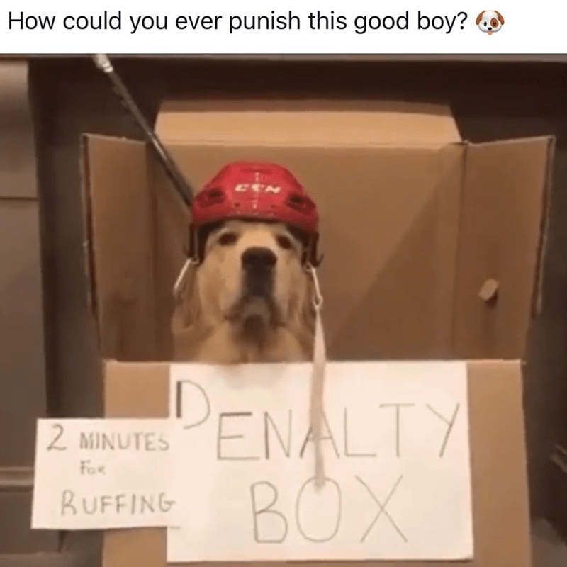 Dog - How could you ever punish this good boy? ENALTY BOX 2 MINUTES FoR BUFFING