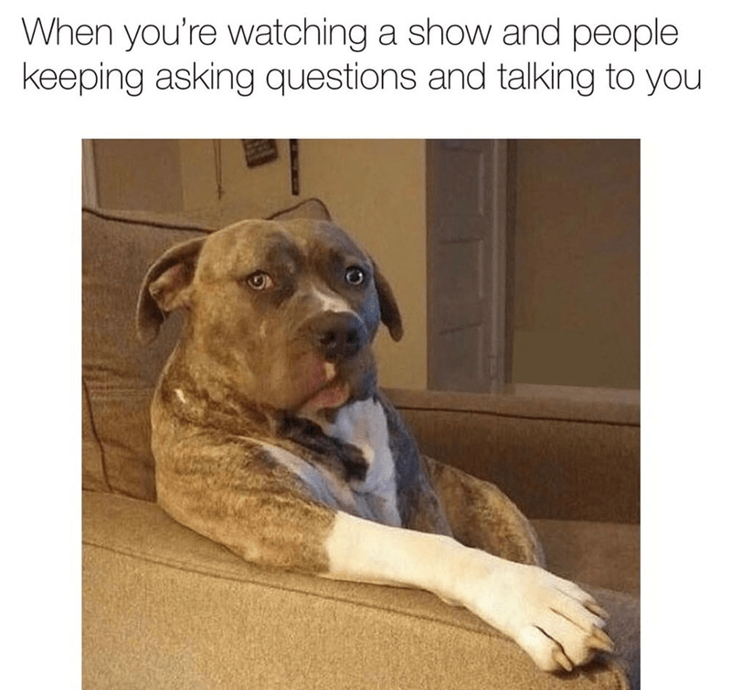 Dog - When you're watching a show and people keeping asking questions and talking to you