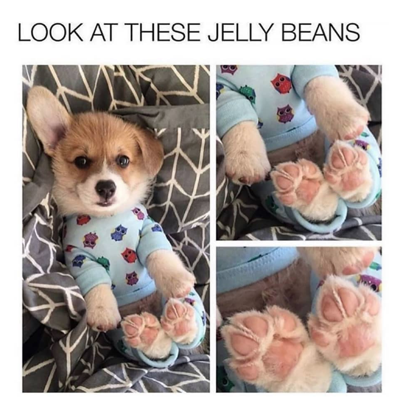 Dog - LOOK AT THESE JELLY BEANS