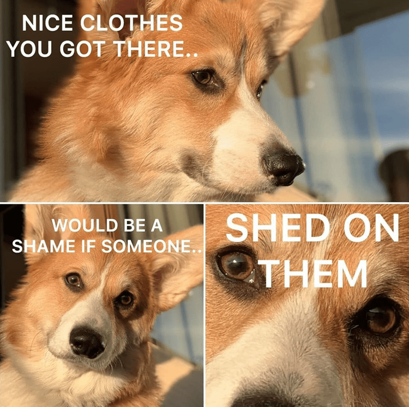 Dog - NICE CLOTHES YOU GOT THERE. SHED ON THEM WOULD BE A SHAME IF SOMEONE.