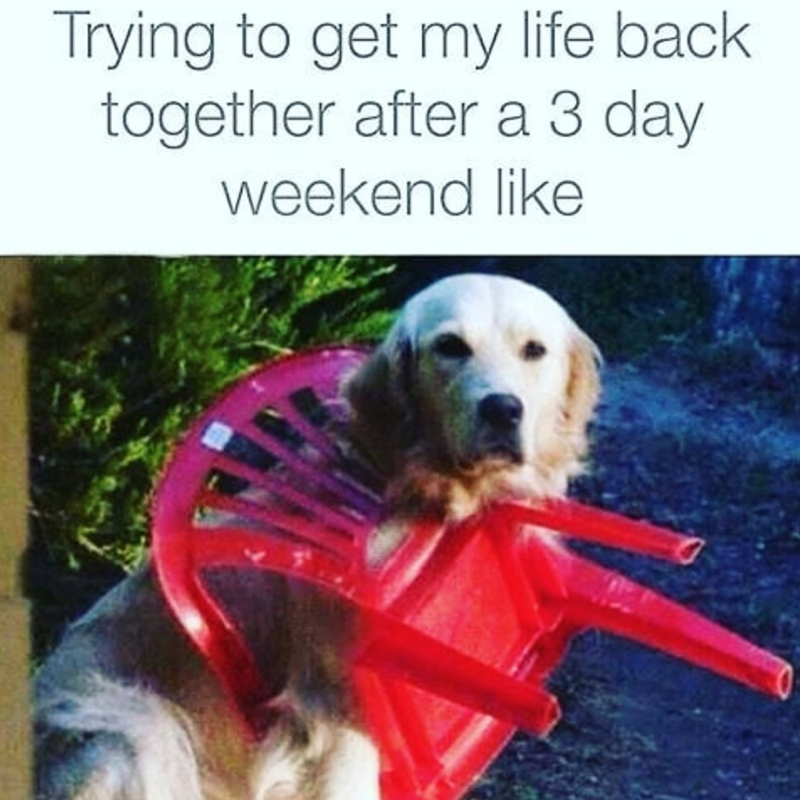 Dog - Trying to get my life back together after a 3 day weekend like