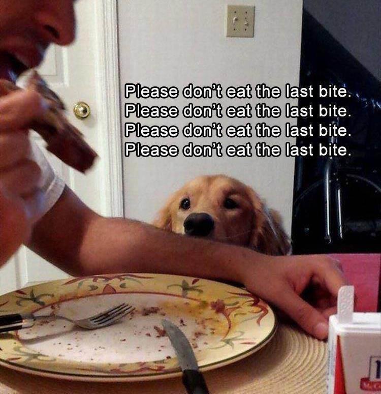 Dog - Please don't eat the last bite.. Please don't eat the last bite. Please don't eat the last bite. Please don't eat the last bite.