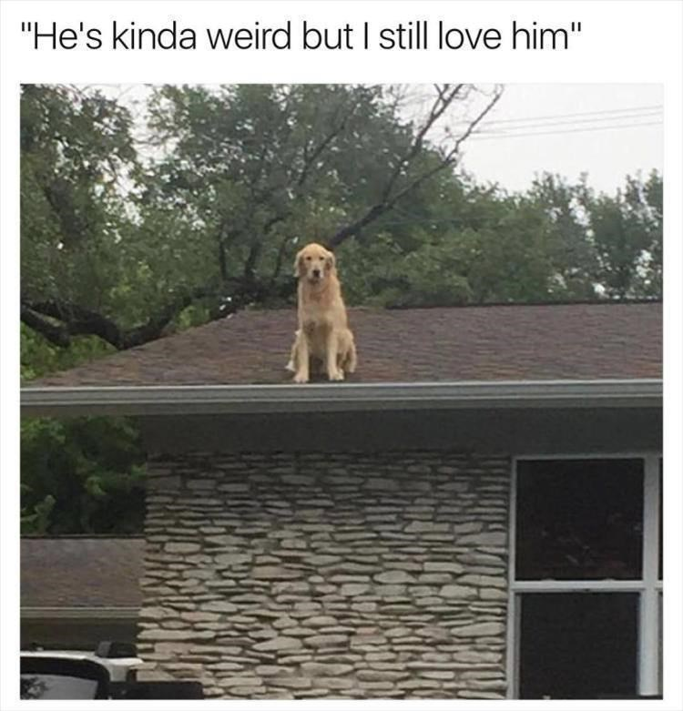 "Dog - ""He's kinda weird but I still love him"""