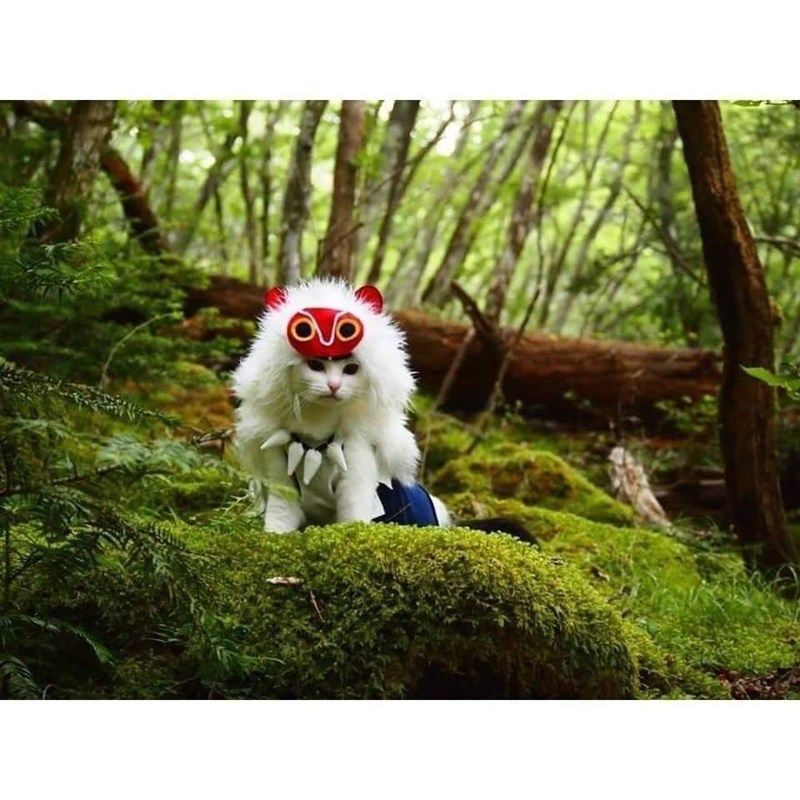 cat cosplay - Canidae - - ক