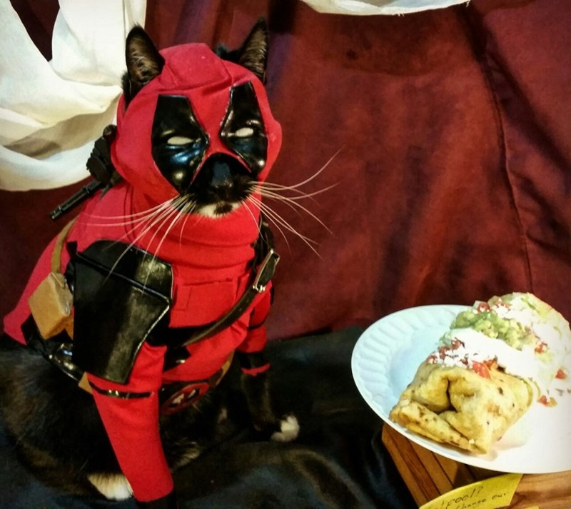 cat cosplay - Food