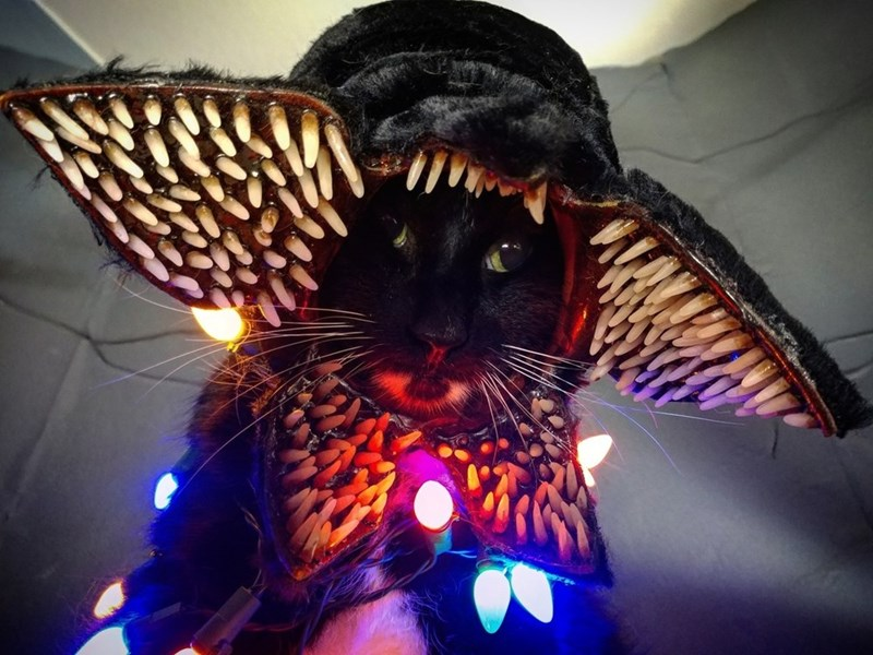 cat cosplay - Light