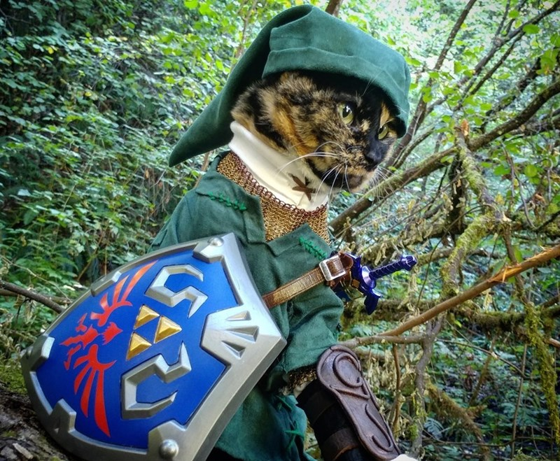 cat cosplay - Natural environment