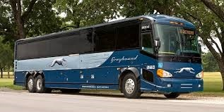 a dark blue large Greyhound bus is parked in front of a park with green trees and grass behind it