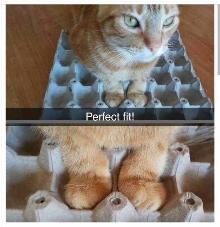 Cat - Perfect fit!