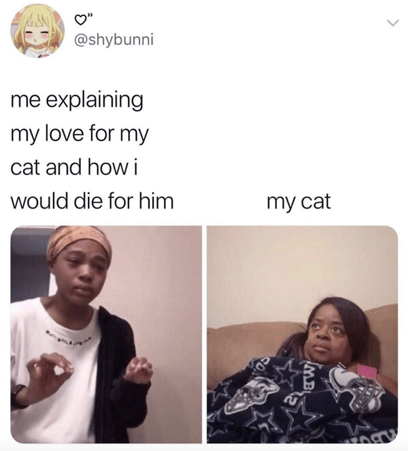 Face - @shybunni me explaining my love for my cat and how i would die for him my cat MB