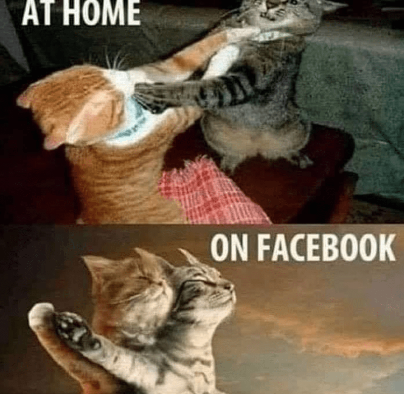Cat - AT HOME ON FACEBOOK