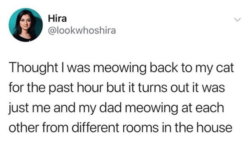 Text - Hira @lookwhoshira Thought I was meowing back to my cat for the past hour but it turns out it was just me and my dad meowing at each other from different rooms in the house