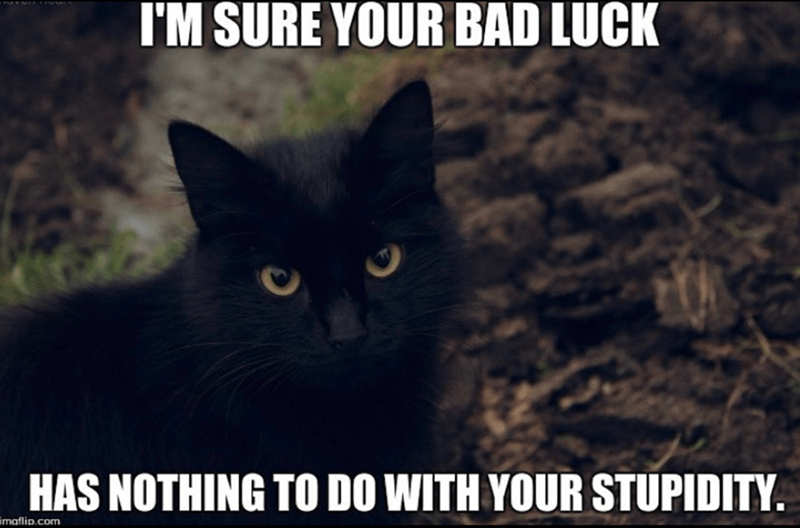 Cat - I'M SURE YOUR BAD LUCK HAS NOTHING TO DO WITH YOUR STUPIDITY i maflip.com