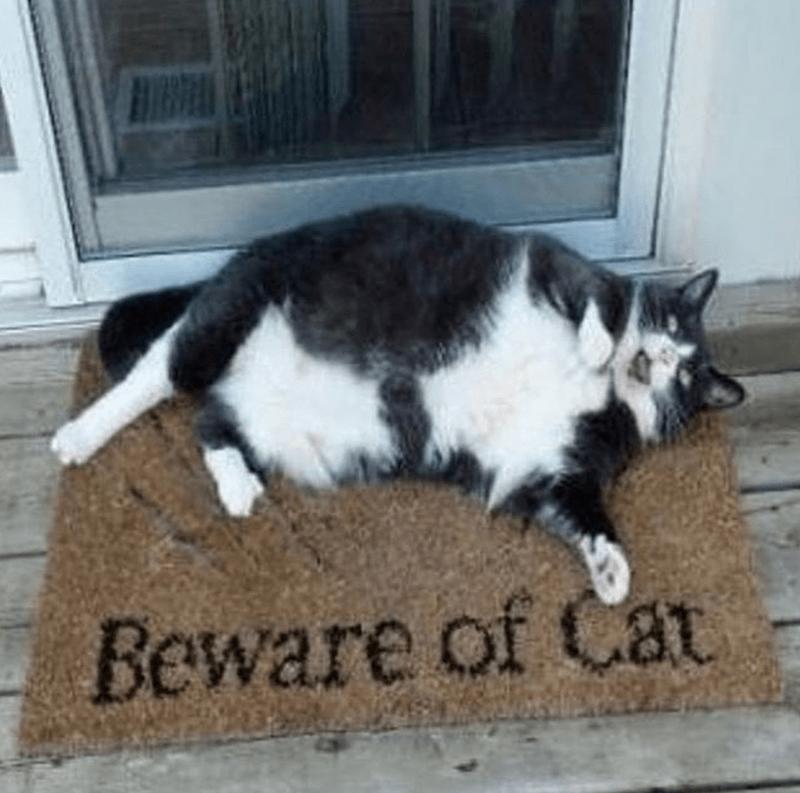 Cat - Beware of Cat