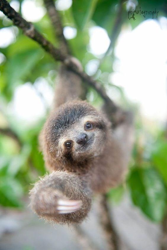 baby sloth - Nature