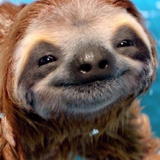baby sloth - Three-toed sloth