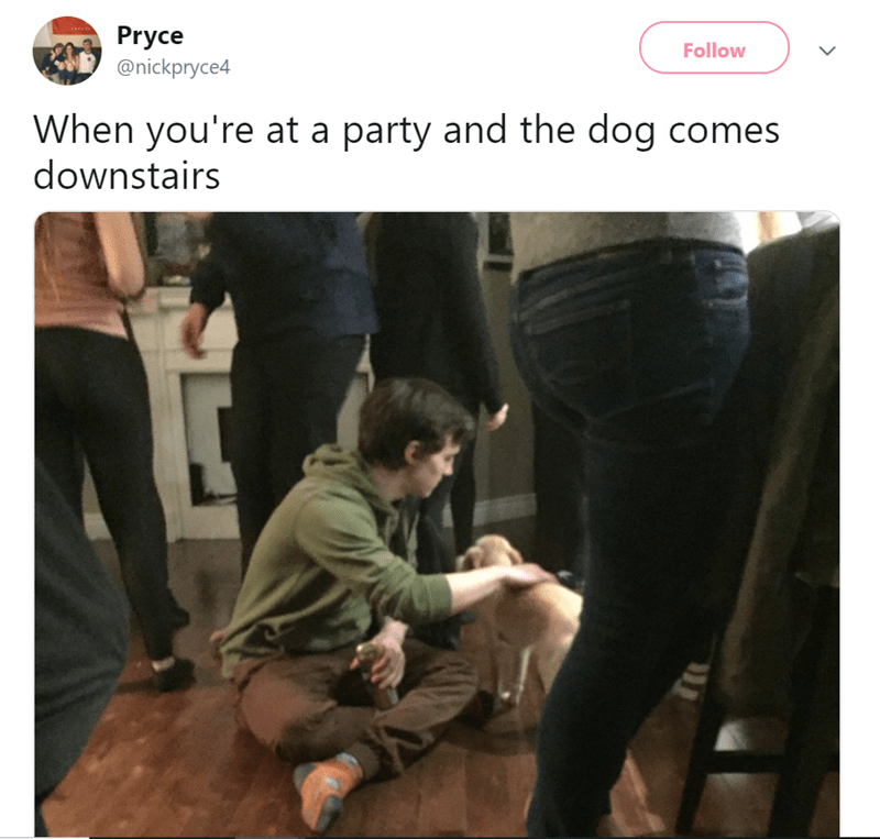 Jeans - Pryce @nickpryce4 Follow When you're at a party and the dog comes downstairs