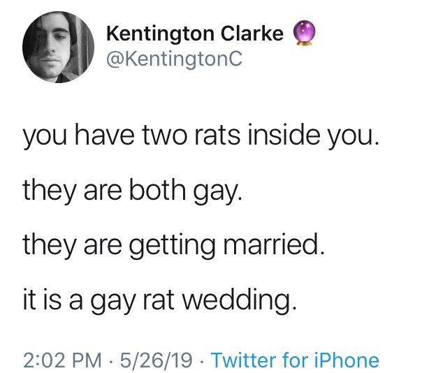 Gay Rat wedding tweets, pbs, arthur, mr ratburn