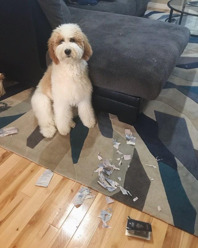 bad fail - Dog