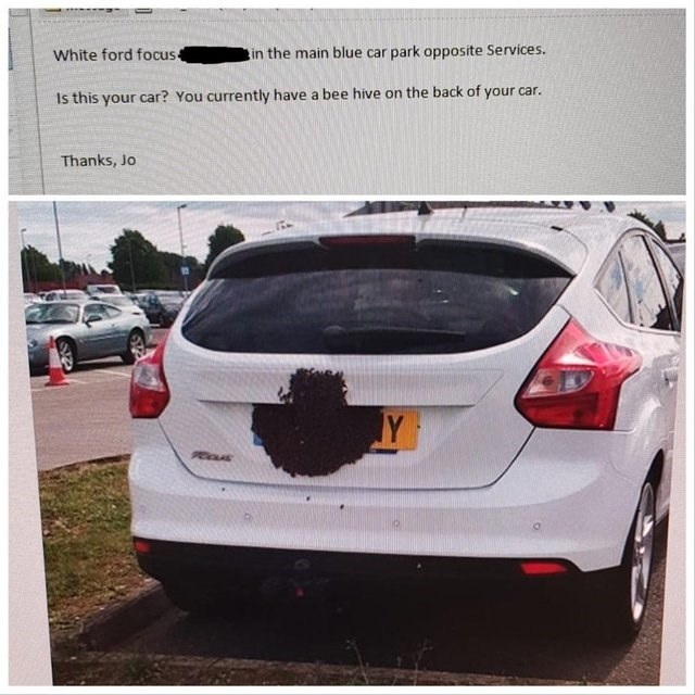 bad fail - Vehicle - White ford focus in the main blue car park opposite Services. Is this your car? You currently have a bee hive on the back of your car. Thanks, Jo