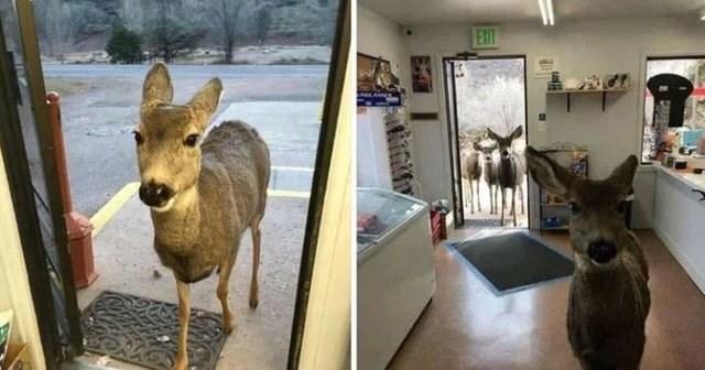 bad fail - Deer - EXIT
