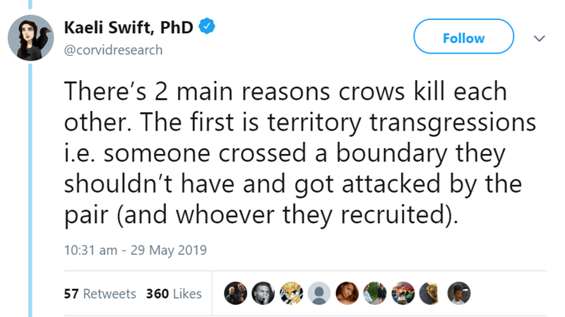 Text - Kaeli Swift, PhD Follow @corvidresearch There's 2 main reasons crows kill each other. The first is territory transgressions i.e. someone crossed a boundary they shouldn't have and got attacked by the pair (and whoever they recruited) 10:31 am 29 May 2019 57 Retweets 360 Likes