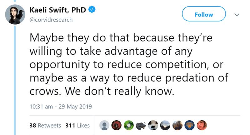 Text - Kaeli Swift, PhD Follow @corvidresearch Maybe they do that because they're willing to take advantage of any opportunity to reduce competition, or maybe as a way to reduce predation of crows. We don't really know. 10:31 am 29 May 2019 AIY 38 Retweets 311 Likes