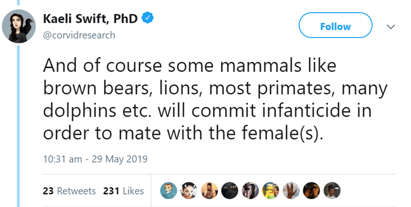 Text - Kaeli Swift, PhD Follow @corvidresearch And of course some mammals like brown bears, lions, most primates, many dolphins etc. will commit infanticide in order to mate with the female(s) 10:31 am 29 May 2019 23 Retweets 231 Likes