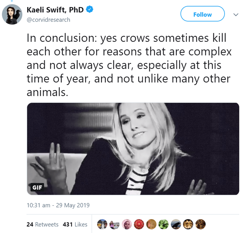 Text - Kaeli Swift, PhD Follow @corvidresearch In conclusion: yes crows sometimes kill each other for reasons that are complex and not always clear, especially at this time of year, and not unlike many other animals. GIF 10:31 am 29 May 2019 24 Retweets 431 Likes
