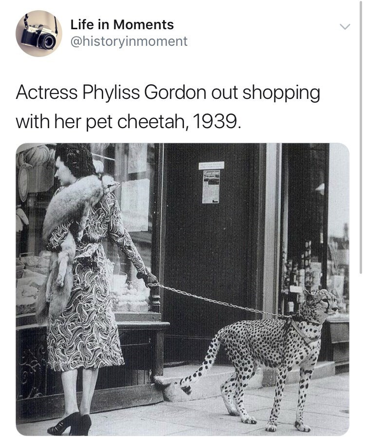Felidae - Life in Moments @historyinmoment Actress Phyliss Gordon out shopping with her pet cheetah, 1939.