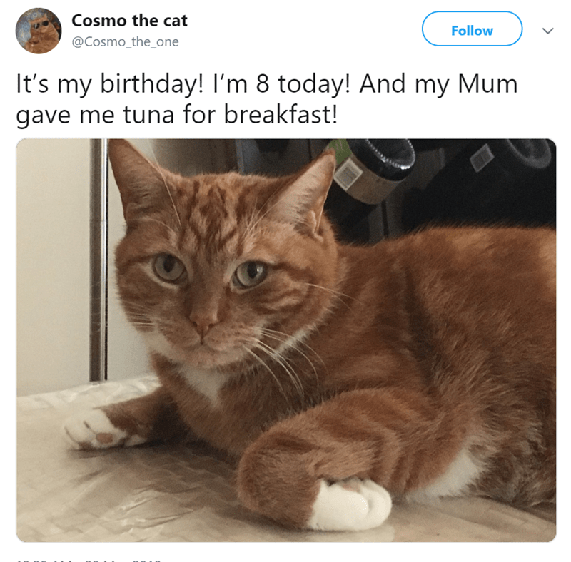 tweet meme of a cat who's having a birthday today