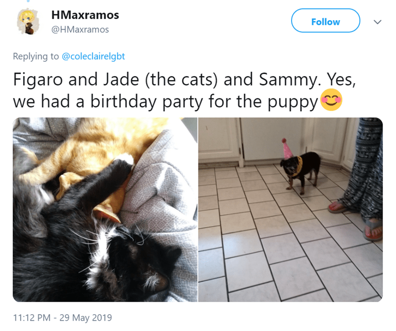 Text - HMaxramos Follow @HMaxramos Replying to @coleclairelgbt Figaro and Jade (the cats) and Sammy. Yes, we had a birthday party for the puppy 11:12 PM - 29 May 2019