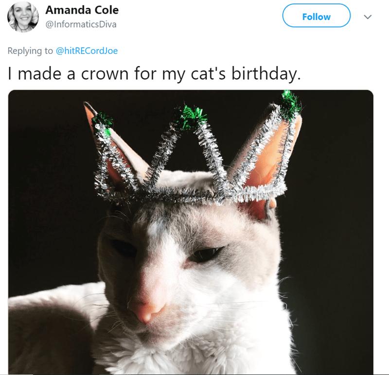Cat - Amanda Cole Follow @InformaticsDiva Replying to @hitRECordJoe I made a crown for my cat's birthday.
