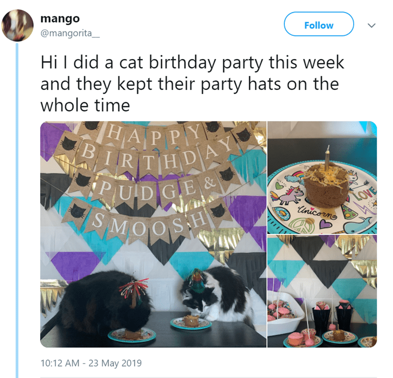 cat birthday party - Human - mango @mangorita_ Follow Hi did a cat birthday party this week and they kept their party hats on the whole time HAP PY BIRIT HDAY PUDIGE& LOVE Unicorno MOOS 10:12 AM - 23 May 2019