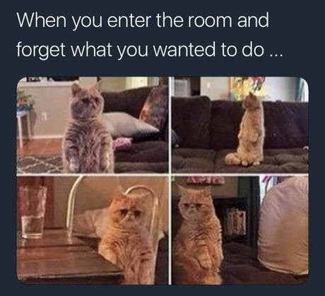 Cat - When you enter the room and forget what you wanted to do ...