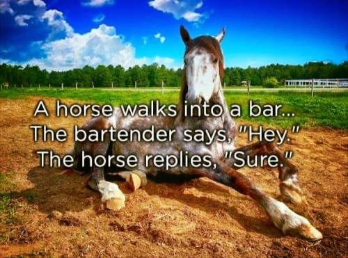 """Horse - A horse walks into a ba... The bartender says """"Hey"""" The horse replies, Sure"""