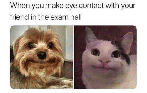 Dog breed - When you make eye contact with your friend in the exam hall