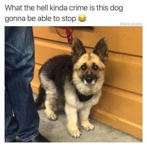 Mammal - What the hell kinda crime is this dog gonna be able to stop tank sinatra