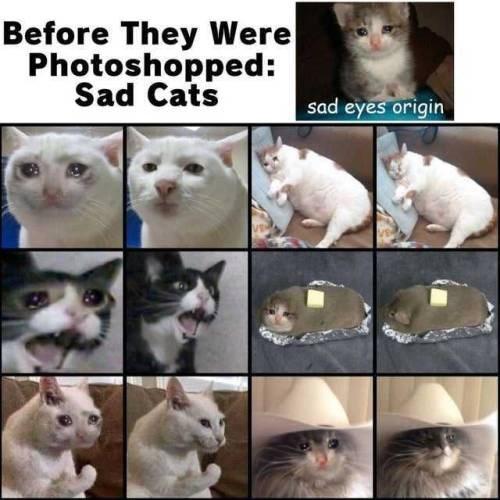 Cat - Before They Were Photoshopped: Sad Cats sad eyes origin