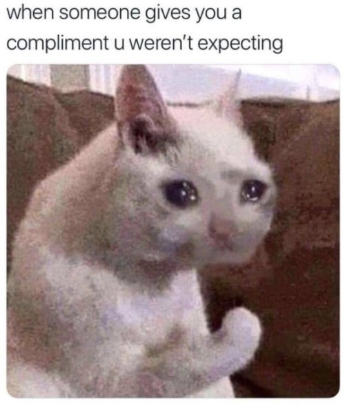 Cat - when someone gives you a compliment u weren't expecting