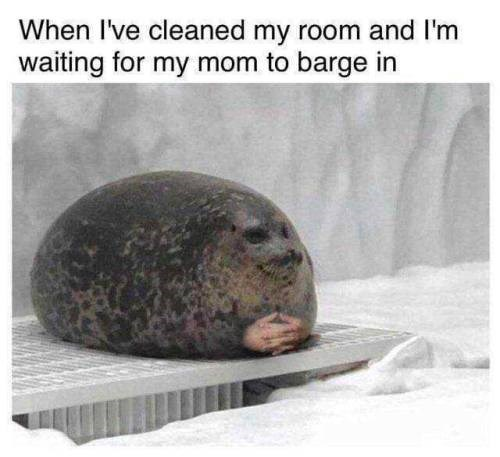 Snout - When I've cleaned my room and I'm waiting for my mom to barge in