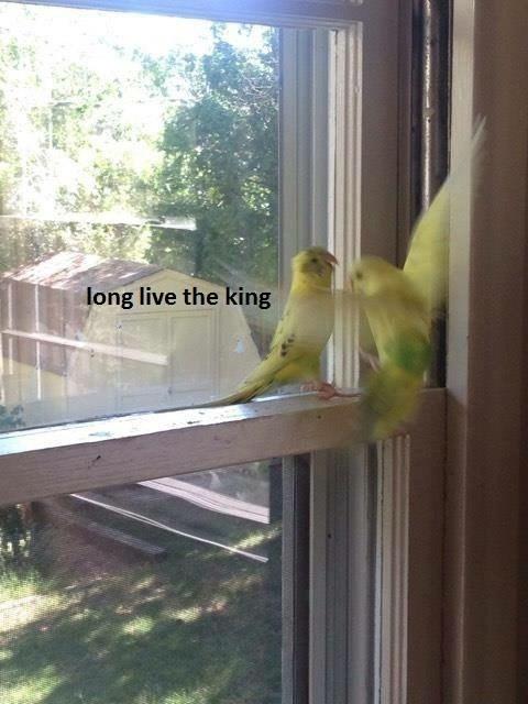 Bird - long live the king