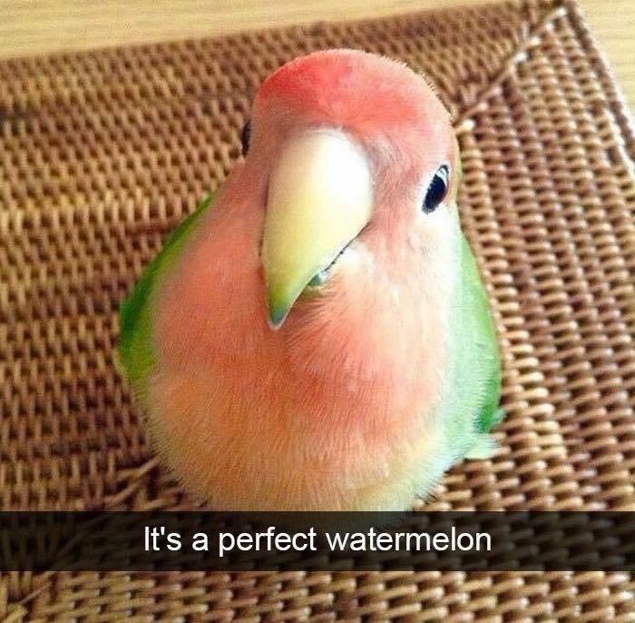 Bird - IELL It's a perfect watermelon