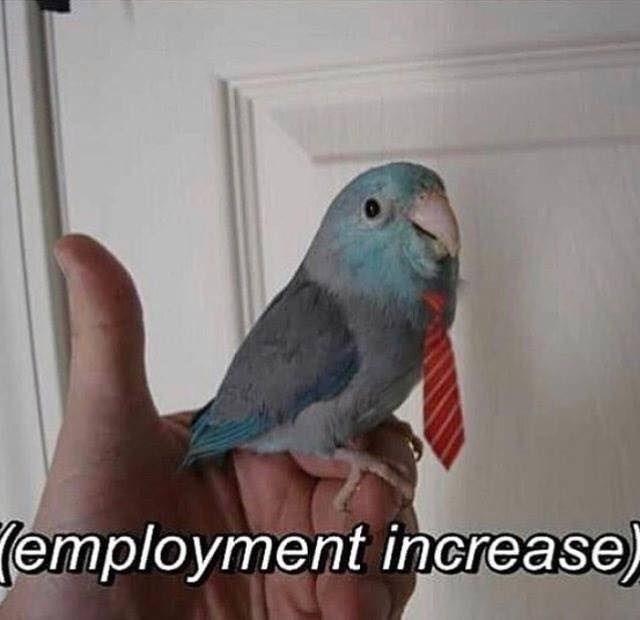 Bird - (employment increase