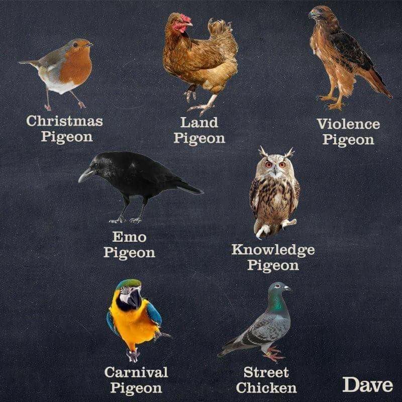 Bird - Christmas Land Violence Pigeon Pigeon Pigeon Emo Knowledge Pigeon Pigeon Carnival Street Chicken Dave Pigeon